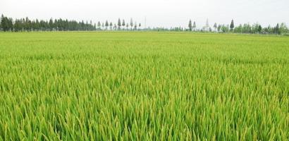 农业种植业